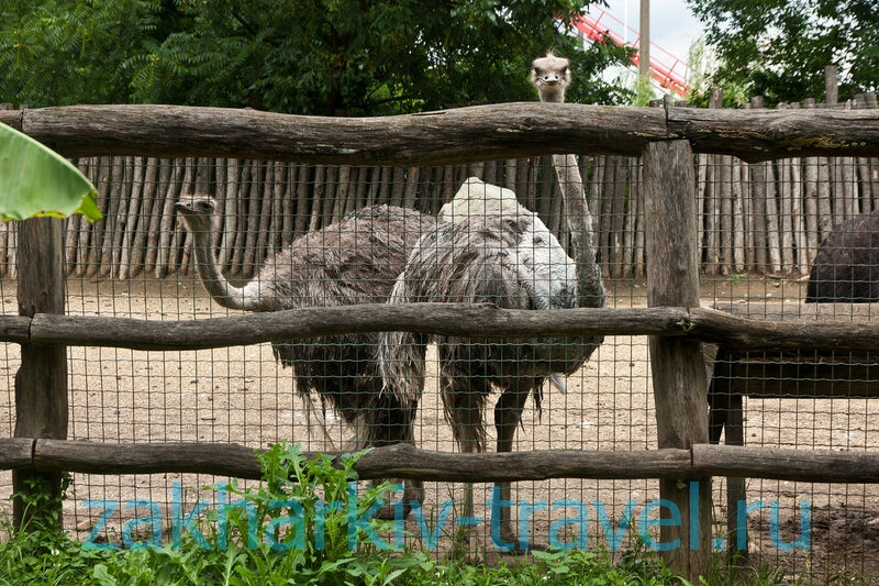 сафари парк краснодар страус