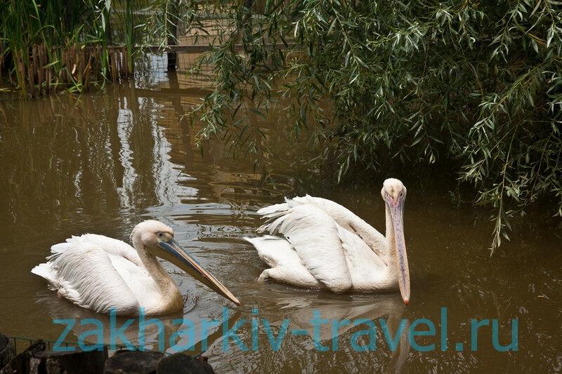 сафари парк краснодар пеликаны