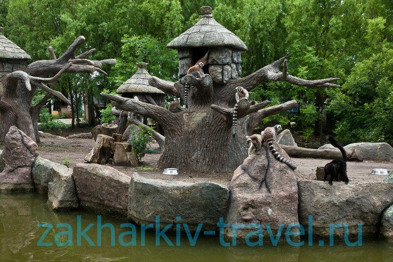 сафари парк краснодар обезьяны