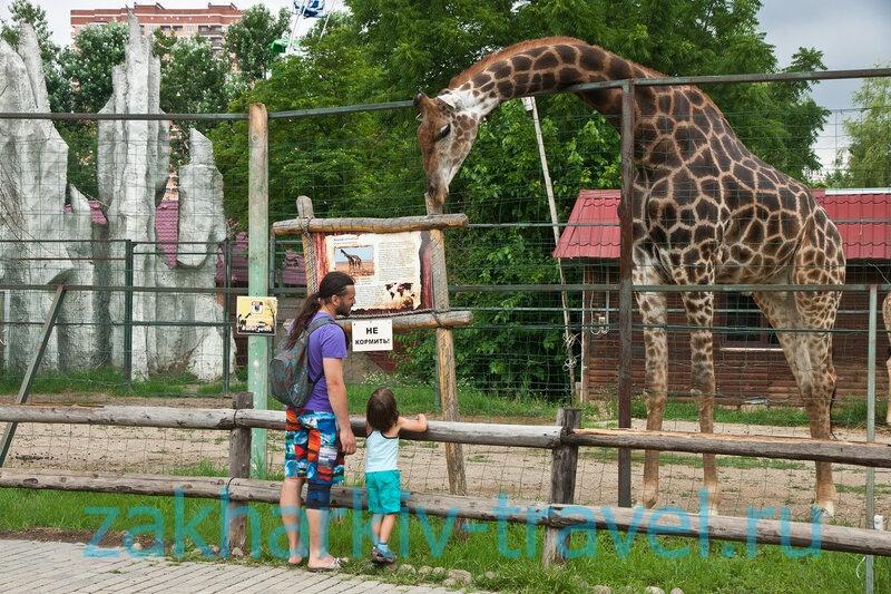 сафари парк краснодар жираф