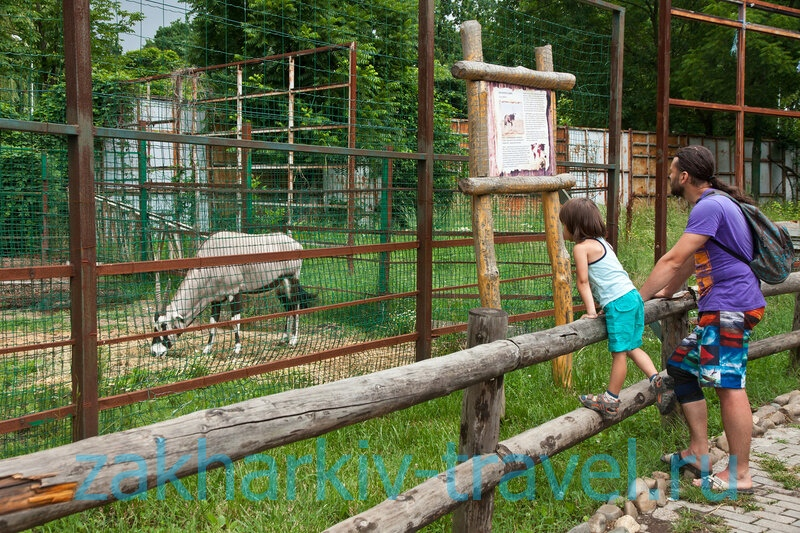 сафари парк краснодар горный козел