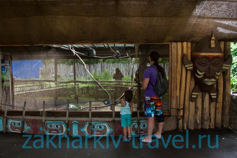 сафари парк краснодар птицы