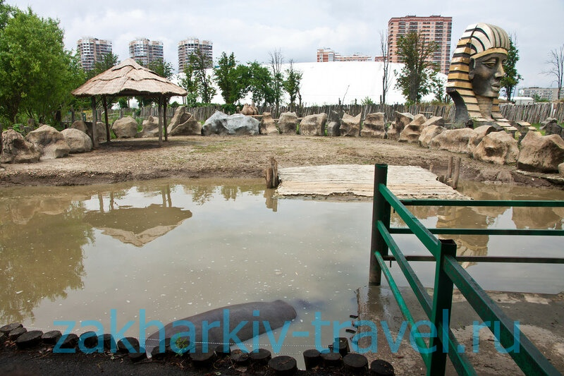 сафари парк краснодар бегемот вблизи
